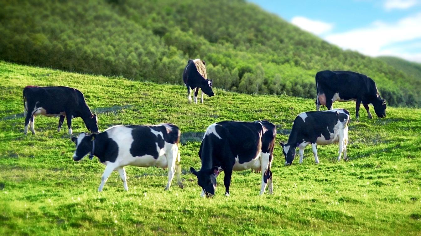 Khái niệm Sữa, lịch sử phát triển, phân loại và các vấn đề còn tranh cãi