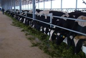 Ngành sữa Việt Nam: Thách thức và cơ hội